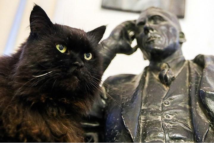 """Những chú mèo nổi tiếng """"làm việc"""" cho các viện bảo tàng ở Nga - Ảnh 1."""