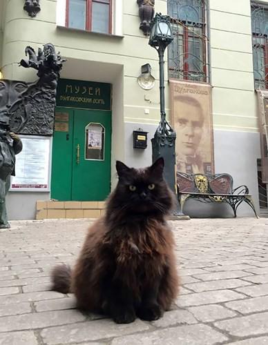 """Những chú mèo nổi tiếng """"làm việc"""" cho các viện bảo tàng ở Nga - Ảnh 2."""