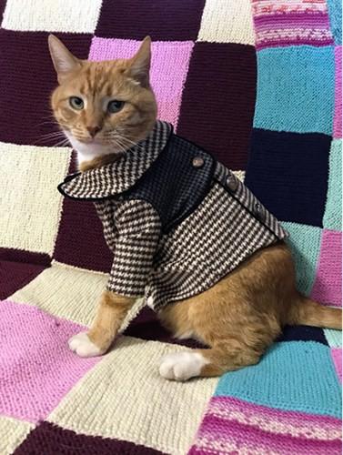 """Những chú mèo nổi tiếng """"làm việc"""" cho các viện bảo tàng ở Nga - Ảnh 12."""