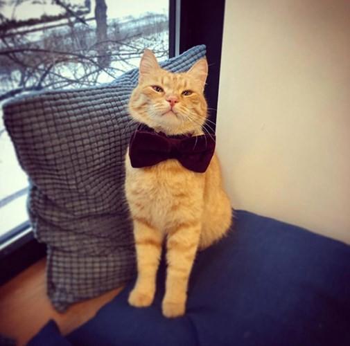 """Những chú mèo nổi tiếng """"làm việc"""" cho các viện bảo tàng ở Nga - Ảnh 13."""