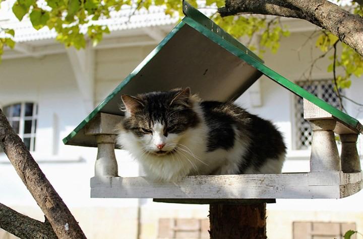 """Những chú mèo nổi tiếng """"làm việc"""" cho các viện bảo tàng ở Nga - Ảnh 14."""