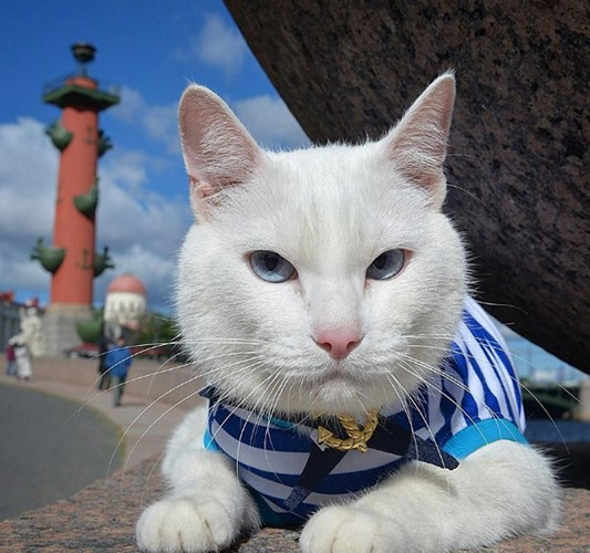 """Những chú mèo nổi tiếng """"làm việc"""" cho các viện bảo tàng ở Nga - Ảnh 3."""