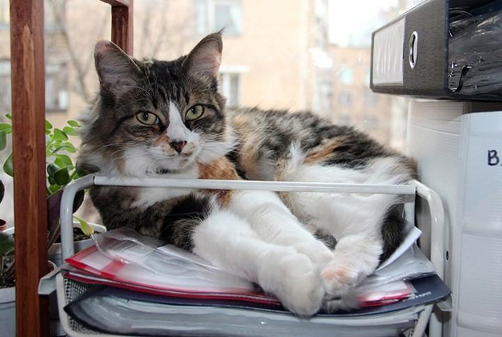 """Những chú mèo nổi tiếng """"làm việc"""" cho các viện bảo tàng ở Nga - Ảnh 4."""