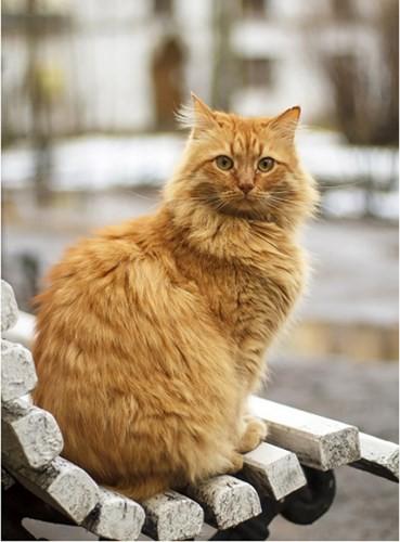 """Những chú mèo nổi tiếng """"làm việc"""" cho các viện bảo tàng ở Nga - Ảnh 5."""