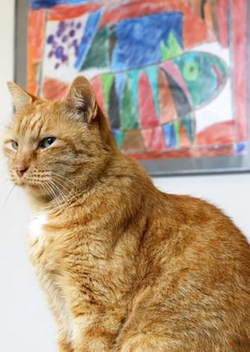 """Những chú mèo nổi tiếng """"làm việc"""" cho các viện bảo tàng ở Nga - Ảnh 6."""