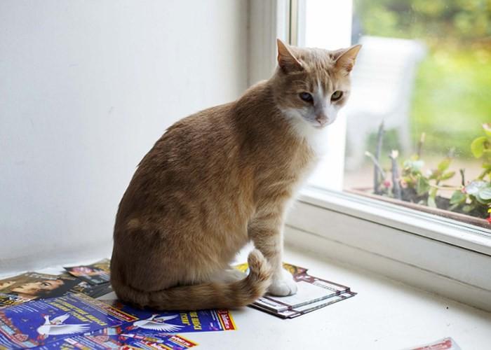 """Những chú mèo nổi tiếng """"làm việc"""" cho các viện bảo tàng ở Nga - Ảnh 7."""