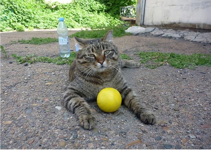 """Những chú mèo nổi tiếng """"làm việc"""" cho các viện bảo tàng ở Nga - Ảnh 9."""