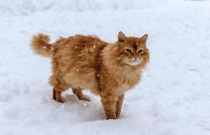 """Những chú mèo nổi tiếng """"làm việc"""" cho các viện bảo tàng ở Nga - Ảnh 10."""