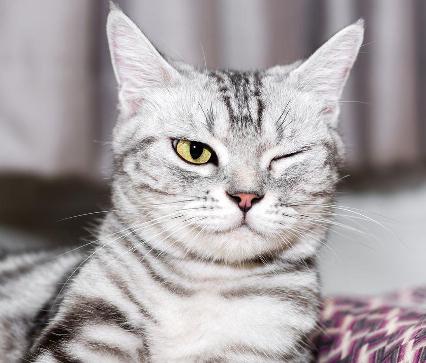 Dành cả thanh xuân để ngủ, nhưng các boss mèo nằm mơ thấy điều gì? - Ảnh 1.