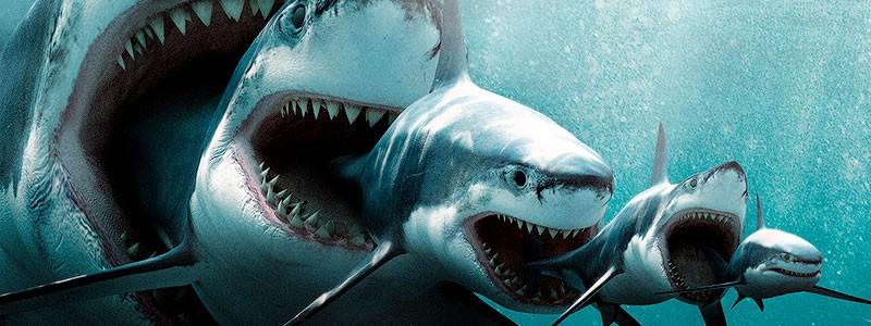 Xem cá mập khổng lồ The Meg ai cũng rùng mình xanh mặt với chi tiết kinh hãi này - Ảnh 1.