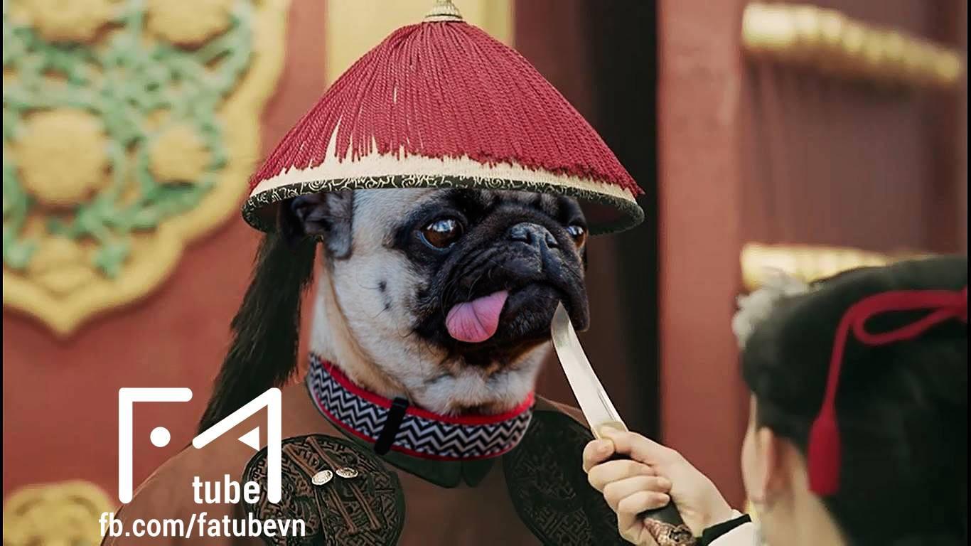 Chùm ảnh: Diên Hi Công Lược phiên bản chó mèo cho các sen xem tạm trong lúc đang hoang mang chuyện dừng phát sóng - Ảnh 2.