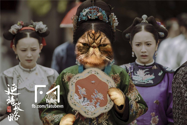 Chùm ảnh: Diên Hi Công Lược phiên bản chó mèo cho các sen xem tạm trong lúc đang hoang mang chuyện dừng phát sóng - Ảnh 5.