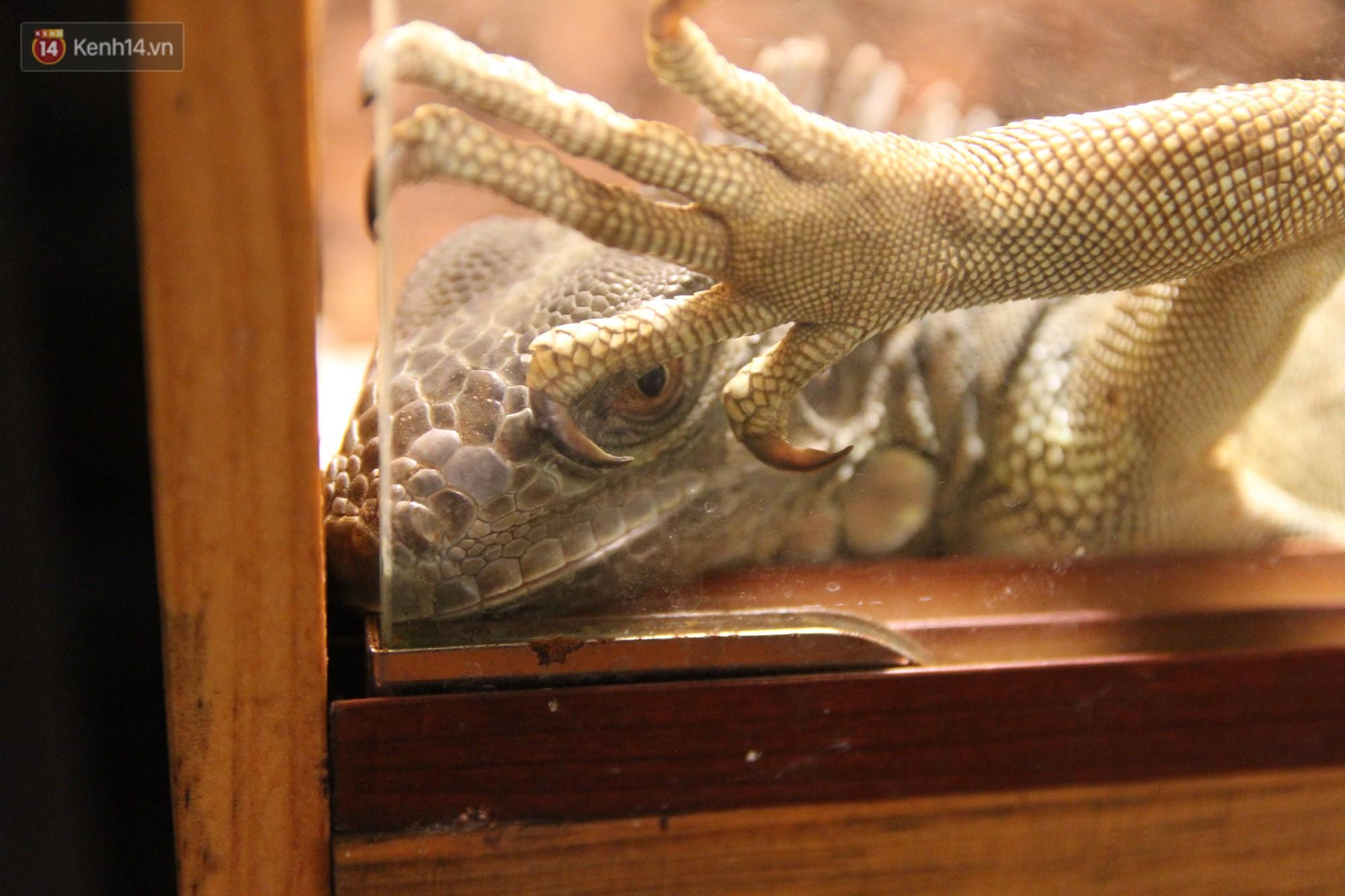 Ông bố trẻ ở Hà Nội và bộ sưu tập những con vật nhìn thôi đã sợ: Đủ các loài rắn, nhện, ếch cho đến rồng đất - Ảnh 11.