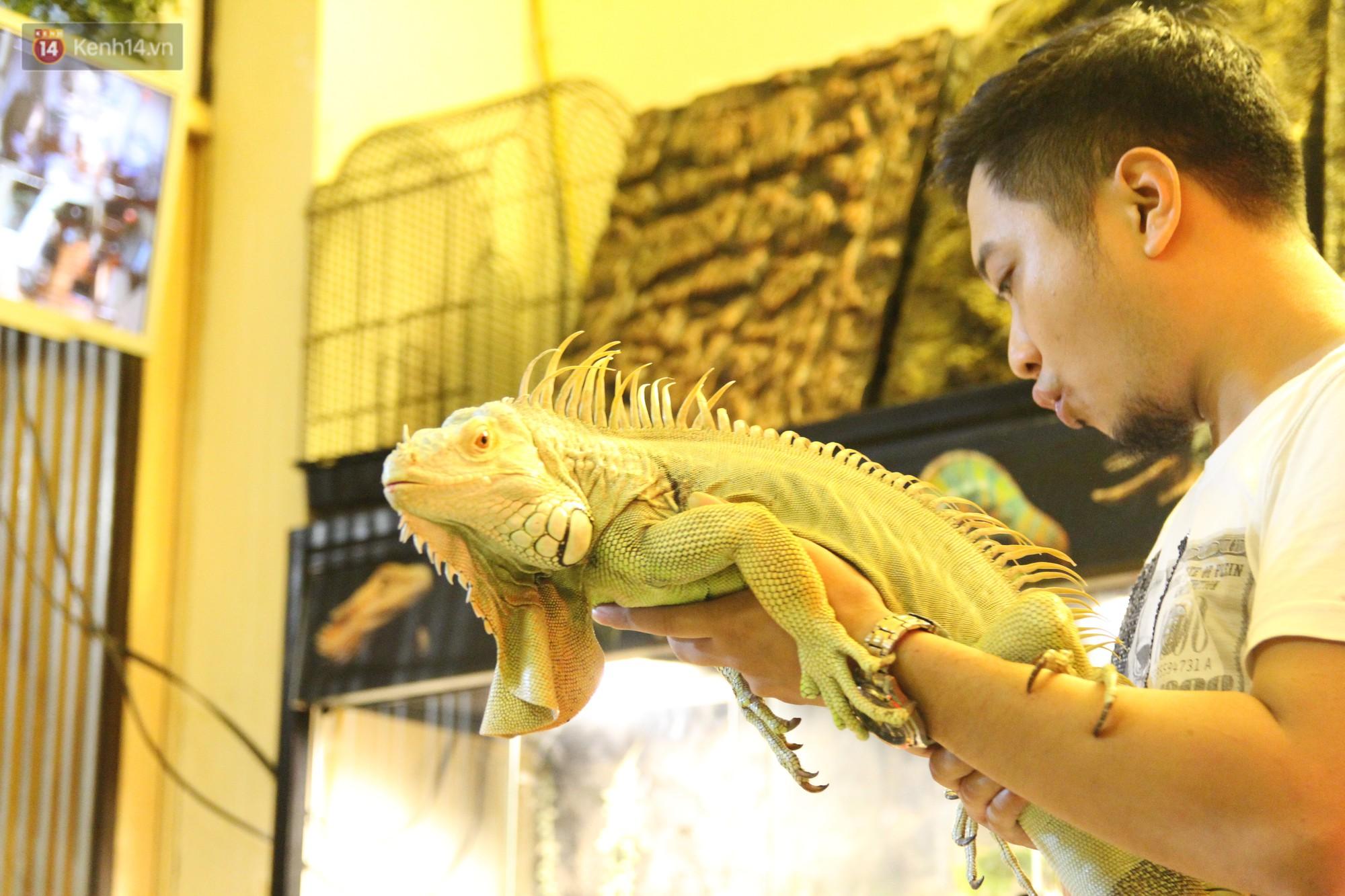 Ông bố trẻ ở Hà Nội và bộ sưu tập những con vật nhìn thôi đã sợ: Đủ các loài rắn, nhện, ếch cho đến rồng đất - Ảnh 2.