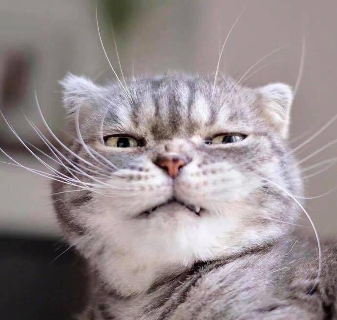 Boss mèo bỗng nổi tiếng MXH vì gương mặt cau có khó ở chẳng ai bằng - Ảnh 3.
