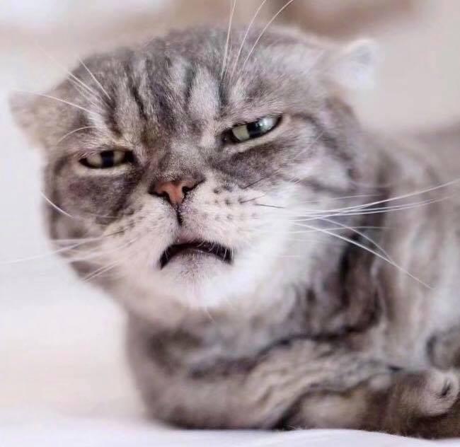 Boss mèo bỗng nổi tiếng MXH vì gương mặt cau có khó ở chẳng ai bằng - Ảnh 4.