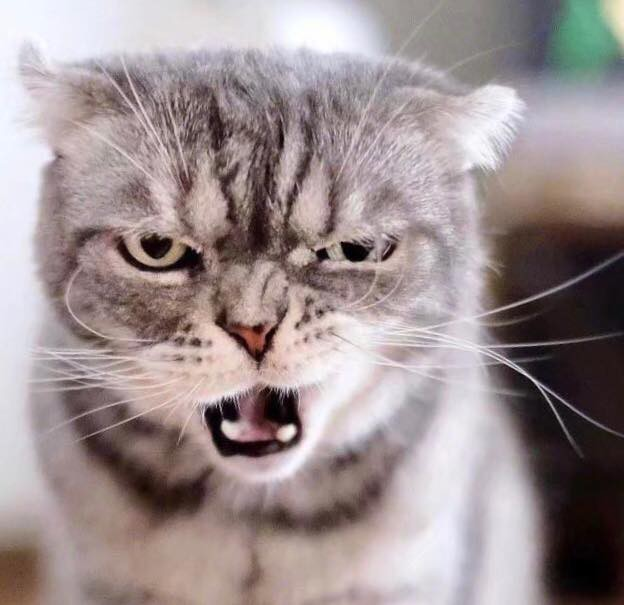 Boss mèo bỗng nổi tiếng MXH vì gương mặt cau có khó ở chẳng ai bằng - Ảnh 5.