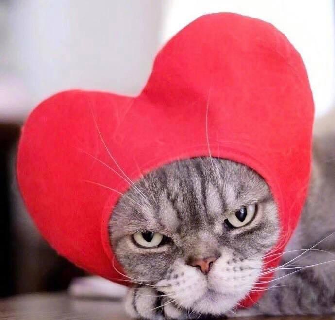 Boss mèo bỗng nổi tiếng MXH vì gương mặt cau có khó ở chẳng ai bằng - Ảnh 6.