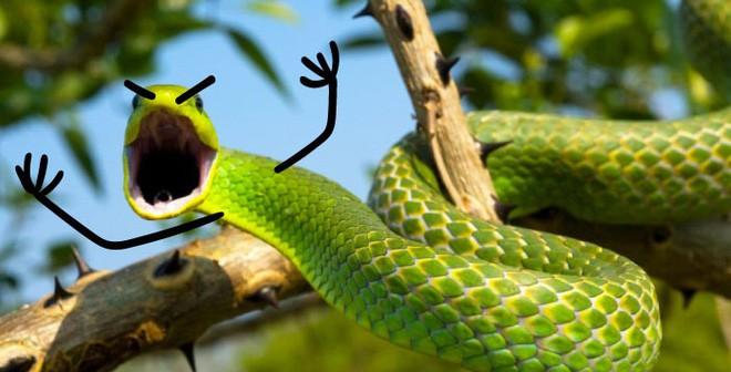 Vẽ rắn thêm chân quả là ngớ ngẩn nhưng vẽ rắn thêm tay lại hay biết mấy - Ảnh 4.