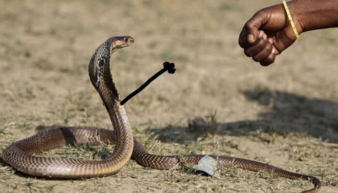 Vẽ rắn thêm chân quả là ngớ ngẩn nhưng vẽ rắn thêm tay lại hay biết mấy - Ảnh 8.