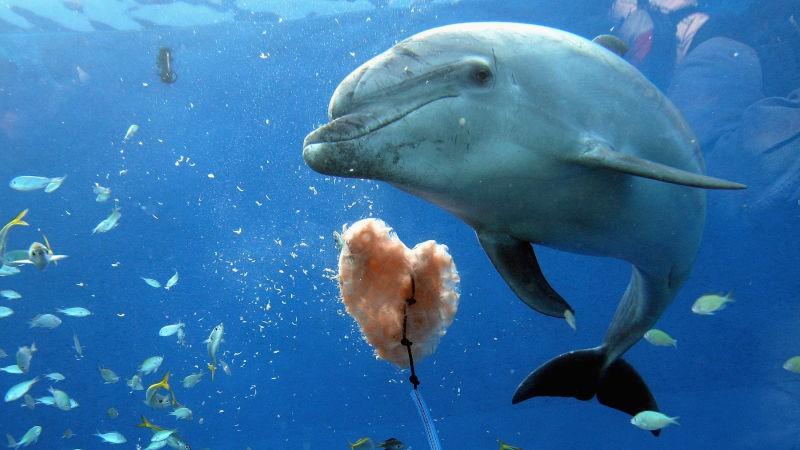 Chuyện éo le của cá heo Zafar: Dậy thì bị rạo rực bèn đi quấy rối du khách, cả bãi biển phải sơ tán gấp - Ảnh 3.