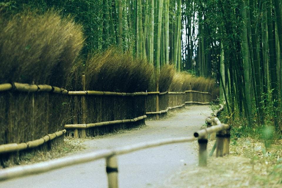 Bộ ảnh ở Kyoto này sẽ cho bạn thấy một Nhật Bản rất khác: Bình yên, dịu dàng và đẹp như những thước phim điện ảnh - Ảnh 6.