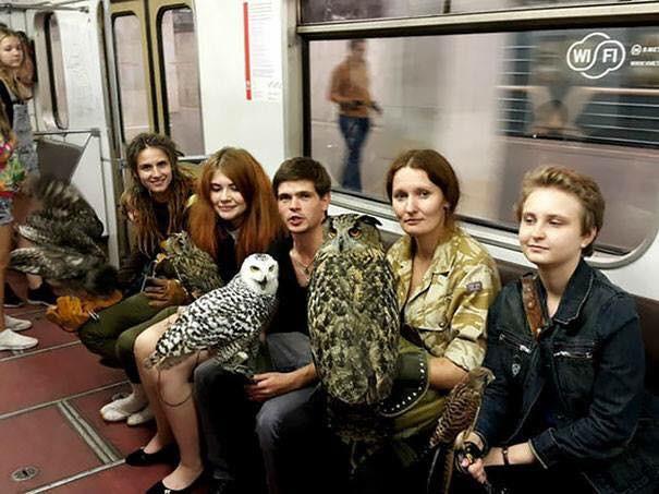 Những hình ảnh hài hước chỉ có trên tàu điện ngầm: Từ chị gái thái rau tới Pikachu thò tay ôm cột - Ảnh 22.