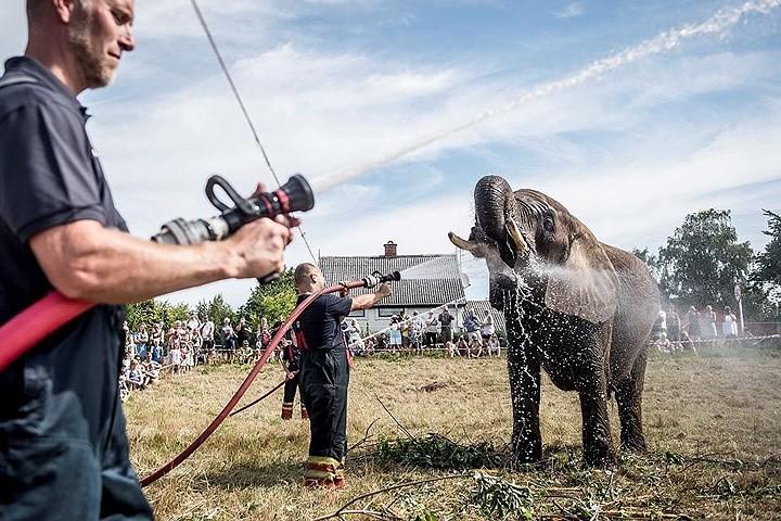 Ảnh: Con người và động vật chiến đấu với nắng nóng kỷ lục ở châu Âu - Ảnh 4.