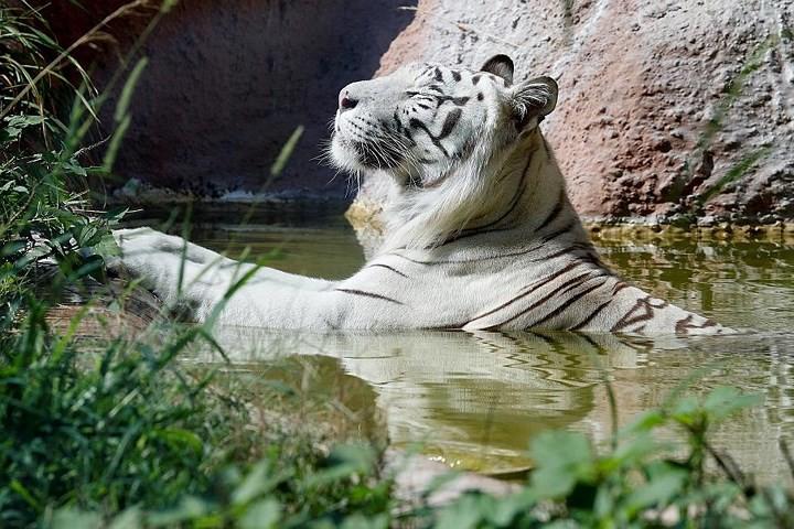 Ảnh: Con người và động vật chiến đấu với nắng nóng kỷ lục ở châu Âu - Ảnh 5.