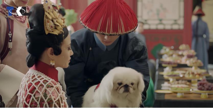"""Cún cưng của Cao Quý phi từng phá banh hoàng cung trong """"Diên Hi"""", nhưng số phận chó hoàng gia có đúng là đẹp như phim? - Ảnh 1."""