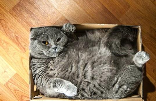 Dán băng dính thành vòng tròn và mèo sẽ ngoan ngoãn ngồi vào không chống cự - tại sao vậy? - Ảnh 3.
