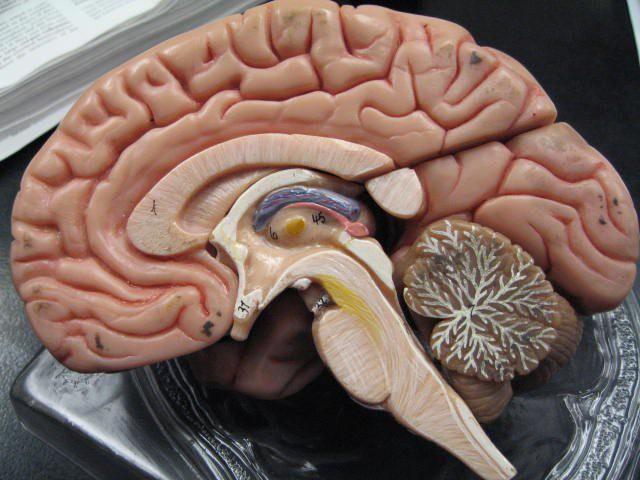 Một cậu bé bị cắt mất 1/6 não bộ, sau 3 năm vẫn sống bình thường mà không hay biết gì - Ảnh 2.