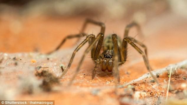 Đọc ngay để tránh: Khoa học mới xác định được thời điểm nhện dễ xuất hiện nhất trong nhà - Ảnh 1.