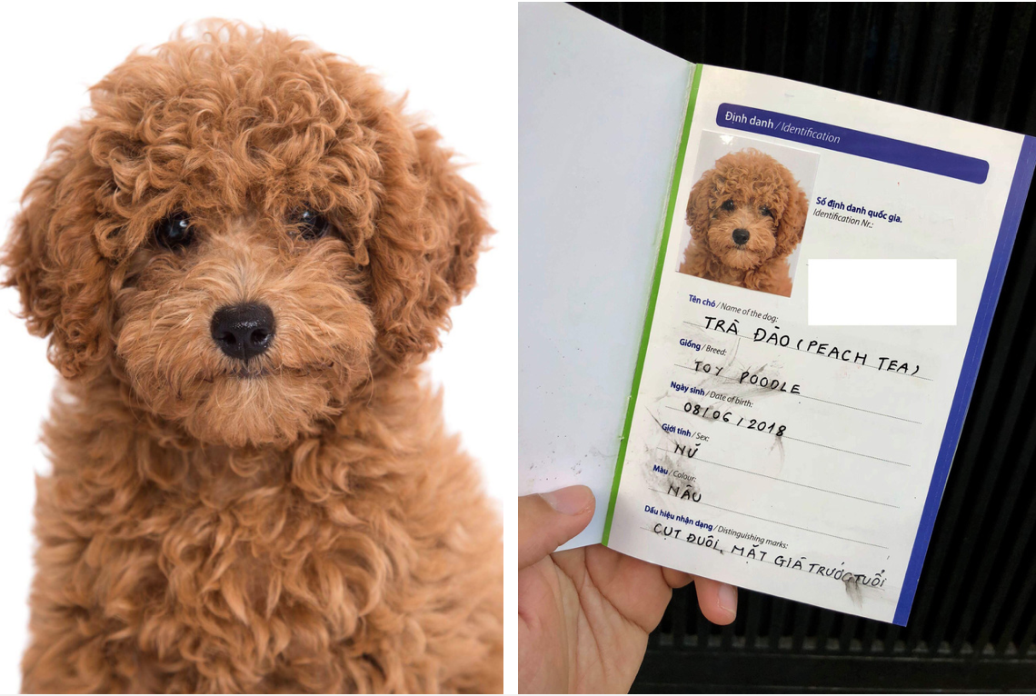 Làm giấy khai sinh cho chó: hóa ra chuyện không lạ như bạn tưởng -