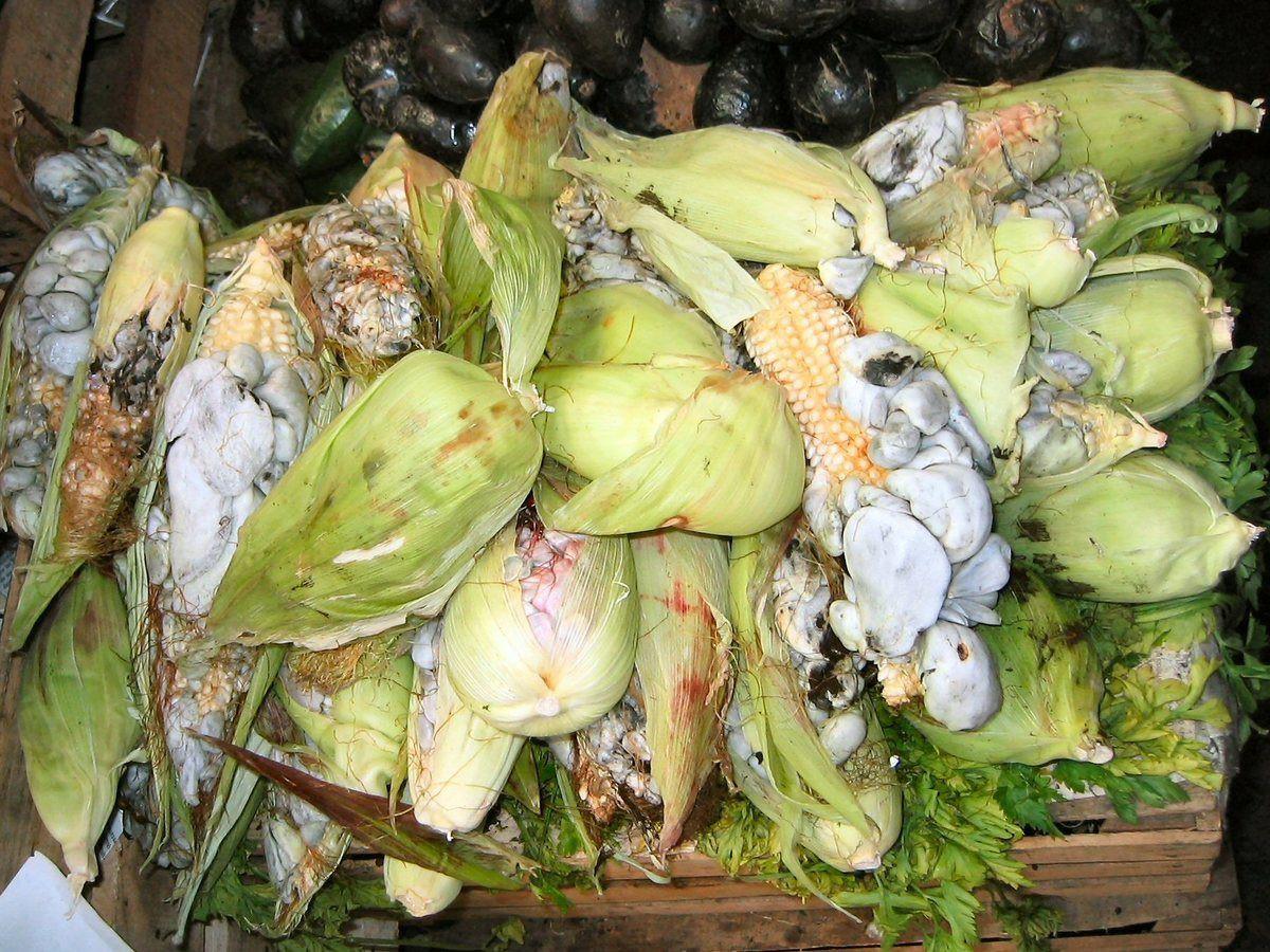 Ẩm thực lạ bốn phương: Đặc sản ngô mốc đen xì của người Mexico - Ảnh 4.