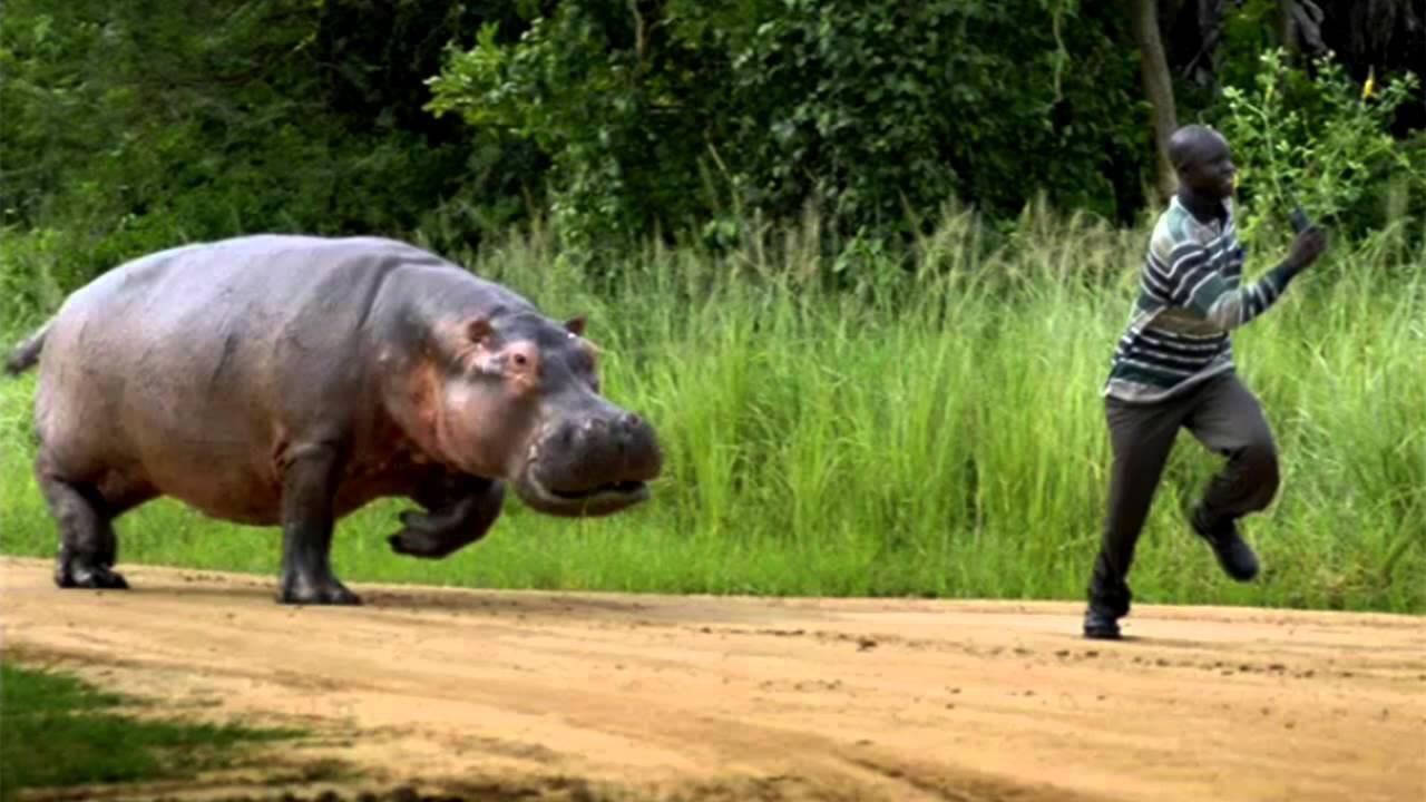 Những loài vật này thực sự xứng đáng có một bộ phim kinh dị dành riêng cho mình - Ảnh 2.