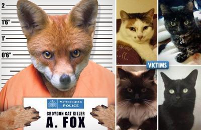 Bí ẩn kẻ giết mèo gây rúng động toàn London trong suốt 3 năm đã có lời giải - thủ phạm là? - Ảnh 2.