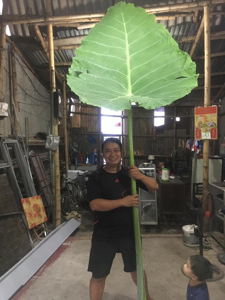 Nam Định: Phát hiện cây dọc mùng khổng lồ cao chạm trần nhà, lá che kín cả một chiếc Exciter - Ảnh 1.