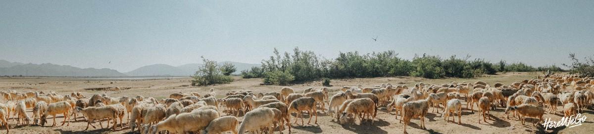 Ninh Thuận: Vị ngọt nơi nắng gió, khắc nghiệt đất trời - Ảnh 34.