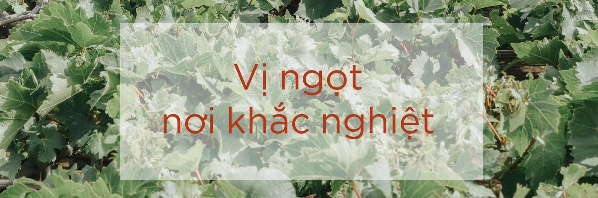 Ninh Thuận: Vị ngọt nơi nắng gió, khắc nghiệt đất trời - Ảnh 26.