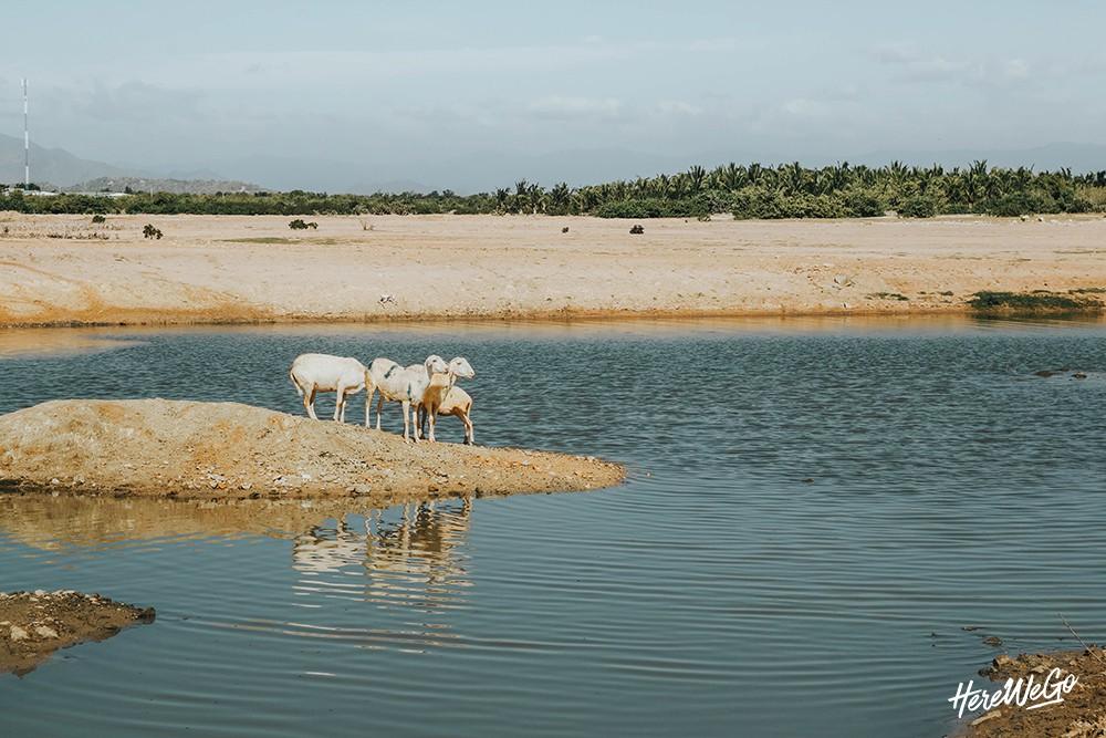 Ninh Thuận: Vị ngọt nơi nắng gió, khắc nghiệt đất trời - Ảnh 31.