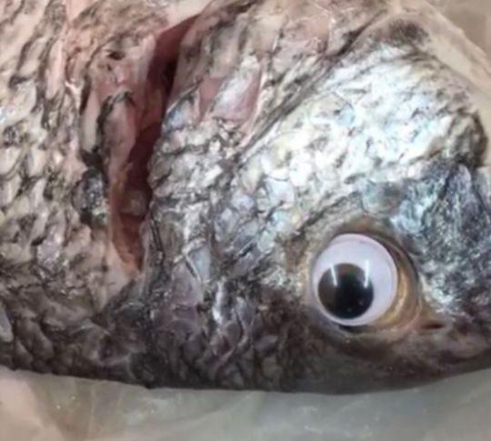 Gian thương ở Kuwait lợi dụng đôi mắt hoạt hình nhảm nhí để làm giả cá tươi - Ảnh 1.