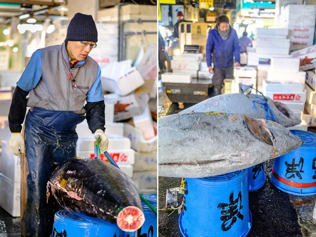 Trong chợ cá lớn nhất thế giới tại Nhật Bản: Mỗi con cá ngừ được bán với giá bằng vài ngôi nhà Nhật Bản - Ảnh 10.