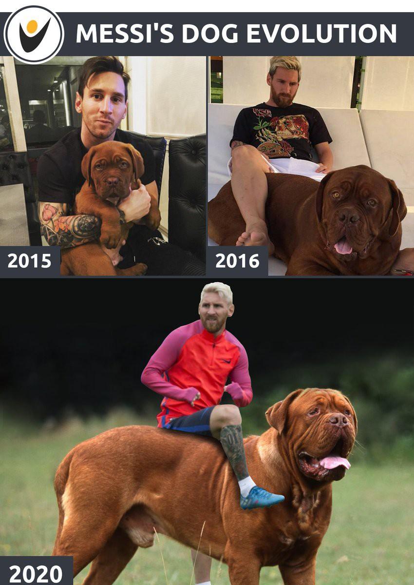 Chú chó nhà Messi giờ đã to lớn thế này cơ mà! - Ảnh 4.