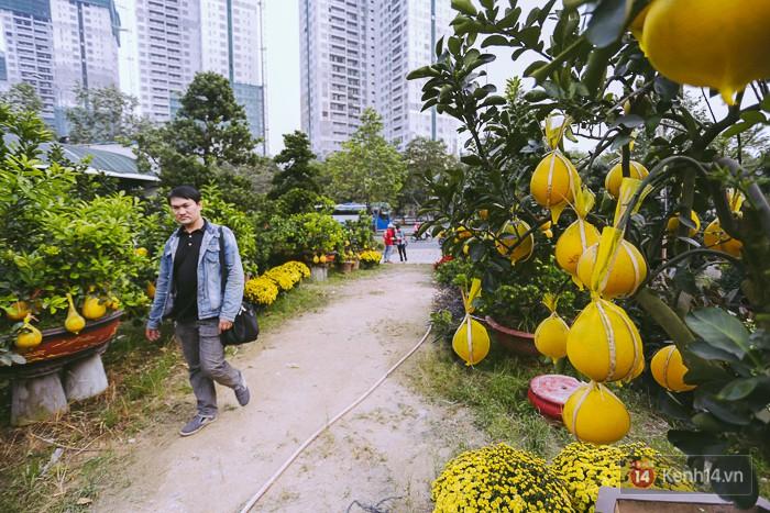 Vượt gần 2.000km từ Hà Nội vào Sài Gòn, bưởi Diễn chưng Tết có giá lên đến 50 triệu đồng/cây - Ảnh 3.