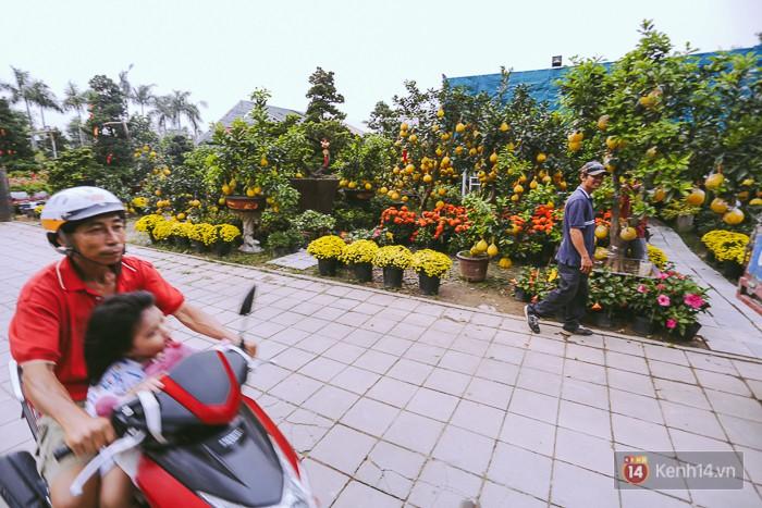 Vượt gần 2.000km từ Hà Nội vào Sài Gòn, bưởi Diễn chưng Tết có giá lên đến 50 triệu đồng/cây - Ảnh 1.