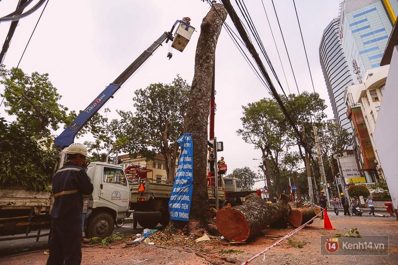 Chùm ảnh: Đường Tôn Đức Thắng trước và sau khi hàng trăm cây xanh bị đốn hạ để phát triển thành phố - Ảnh 1.