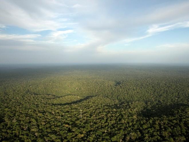 24 bức ảnh cho thấy rừng Amazon từ lá phổi xanh của thế giới đã trở thành chứng tích cho sự tàn phá của con người - Ảnh 2.