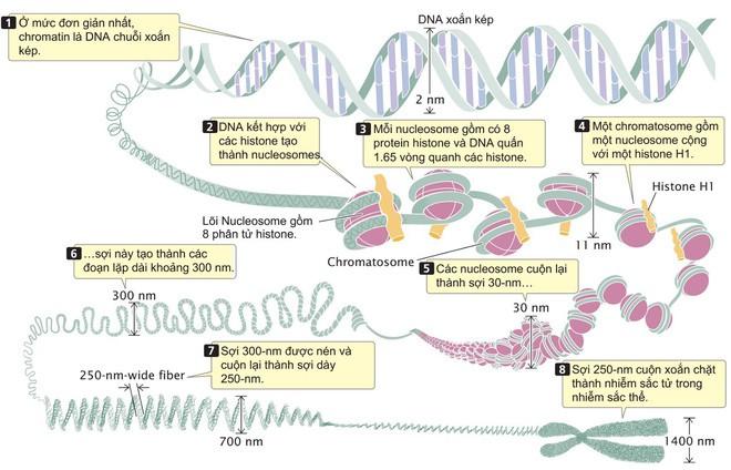 Vi sinh vật trong ruột có thể hack quyền điều khiển bộ gen của bạn, đây là cách chúng làm điều đó - Ảnh 2.