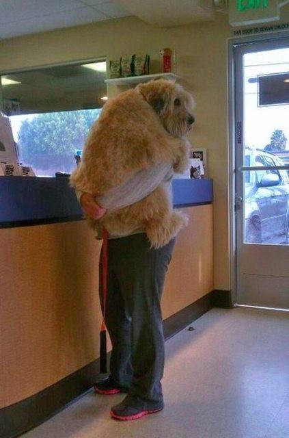 Khuôn mặt đáng thương của 15 chú chó cứ bảo đi bác sĩ là sợ chết khiếp - Ảnh 25.